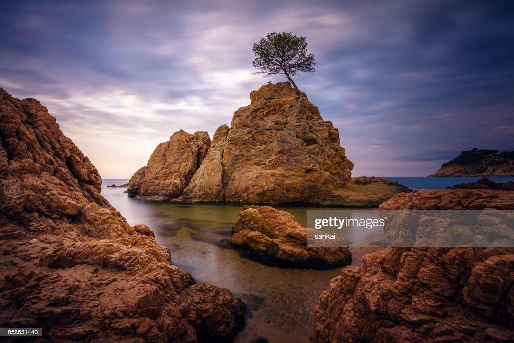 Schöne Landschaft, einsame Baum auf einem Felsen. : Stock-Foto
