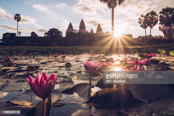 beautiful landscape of angkor wat at sunrise. siem reap, cambodia. - アンコールワット ストックフォトと画像