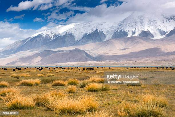 beautiful landscape of khunjerab pass - kyrgyzstan stock pictures, royalty-free photos & images