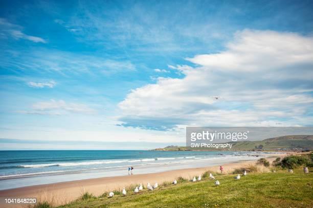 Beautiful Landscape Photo of Kaka point beach, New Zealand
