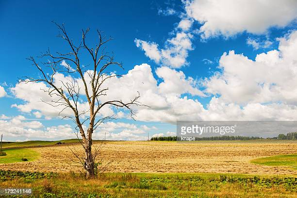 beautiful landscape - dutch elm disease stock pictures, royalty-free photos & images