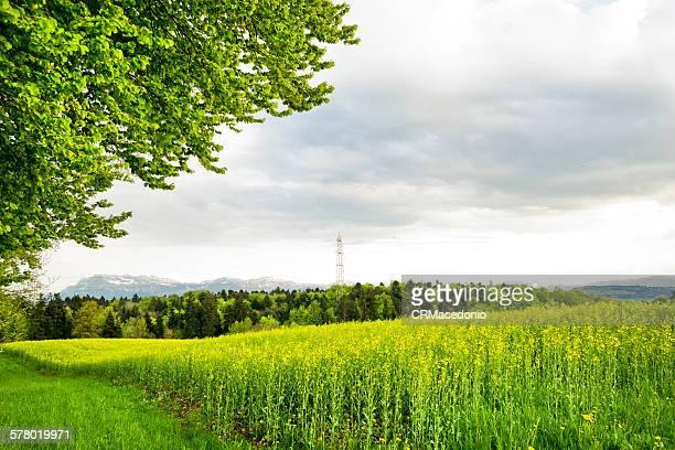 beautiful landscape - crmacedonio imagens e fotografias de stock