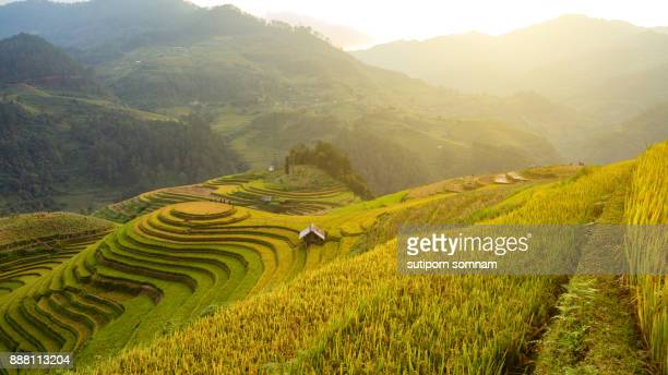 Beautiful landscape Rice field on terrace Mountain