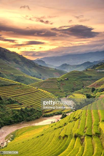 beautiful landscape scene of rice terrace with sunset view in sapa , northern of vietnam - rice terrace stock pictures, royalty-free photos & images
