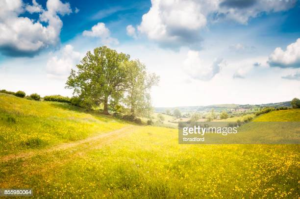 beautiful landscape view in gloucestershire, england - meadow stock photos and pictures