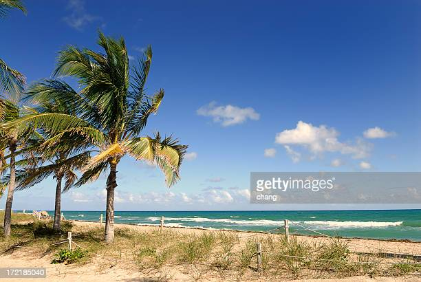 beautiful landscape view of fort lauderdale beach - sunrise fort lauderdale stock pictures, royalty-free photos & images