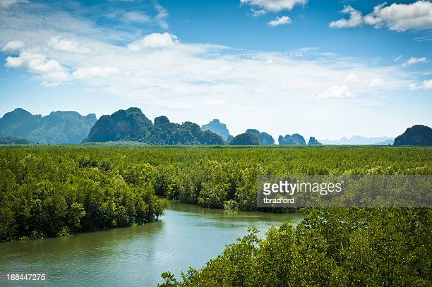 beautiful landscape view of phang nga bay in thailand - mangrove tree stock pictures, royalty-free photos & images