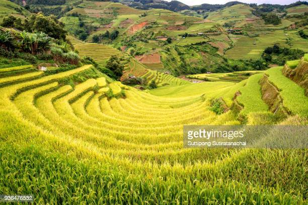 beautiful landscape view of rice terraces and house in Mu cang chai,near sapa northern Vietnam