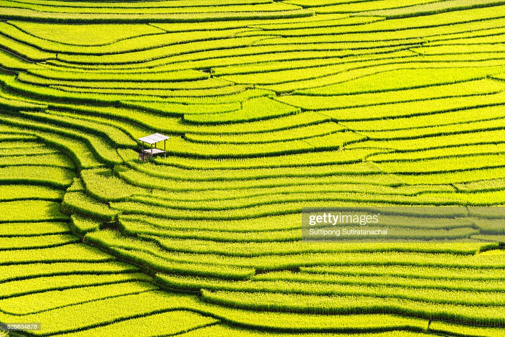 beautiful landscape view of rice terraces and house : Stock-Foto
