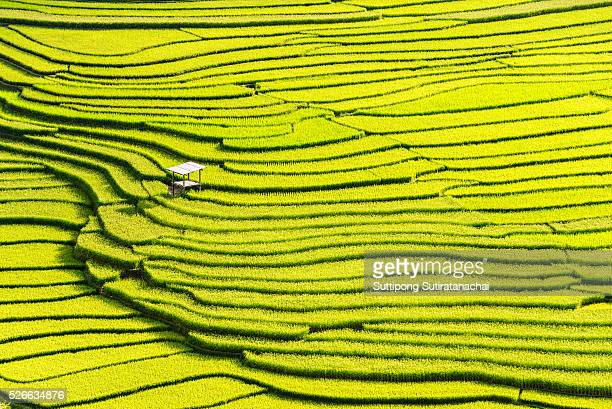 beautiful landscape view of rice terraces and house - reisterrasse stock-fotos und bilder