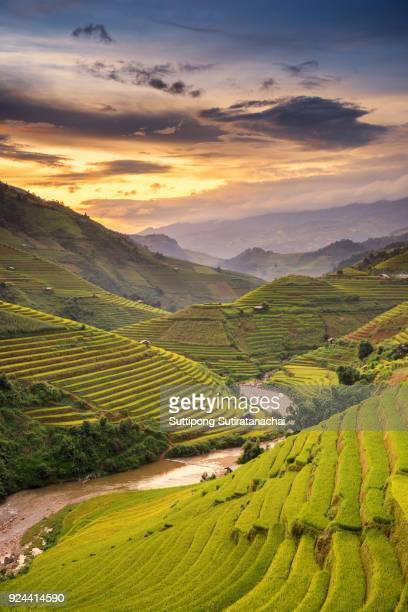 beautiful landscape view of rice terraces and house - sapa stock pictures, royalty-free photos & images