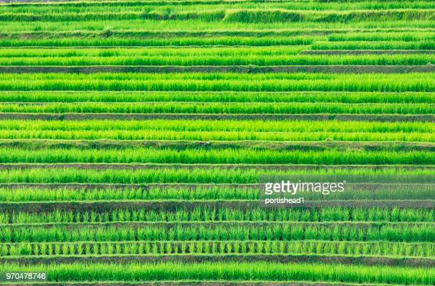 beautiful landscape view of rice terraces - rice terrace stock pictures, royalty-free photos & images