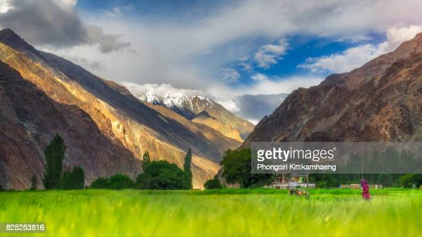 Beautiful Landscape view of rocky and snow-capped mountain with agricultural field and lady in red suit at Turtuk village, Leh Ladakh, India