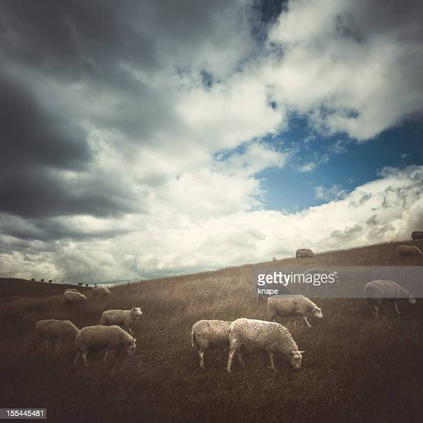 Beautiful landscape with sheeps