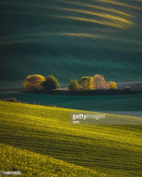 belle vue de paysage avec des collines vertes et des arbres de source en moravie méridionale, tchéquie pendant le coucher du soleil. - mois de mai photos et images de collection