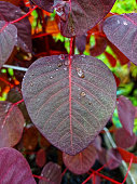 beautiful leaf front yard with drop