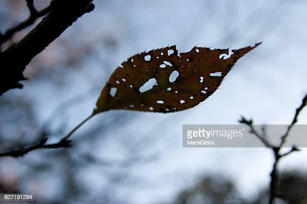 Beautiful leafe