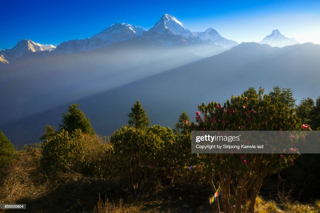 Beautiful light rays spotting to the Annapurna mountain range from Poon Hill viewpoint in the morning. : Stock Photo