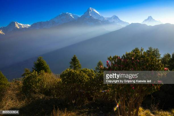 Beautiful light rays spotting to the Annapurna mountain range from Poon Hill viewpoint in the morning.