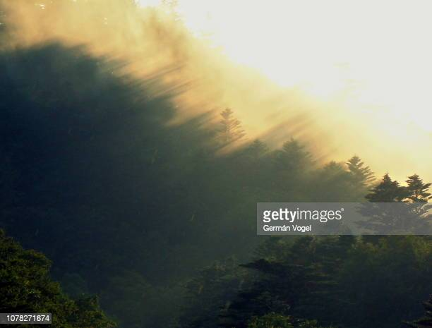 beautiful light threshold natural phenomenon in the chuuzenji lake forest, japan - light natural phenomenon stock pictures, royalty-free photos & images