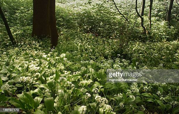 bela luz sob as árvores - estampa de folha - fotografias e filmes do acervo