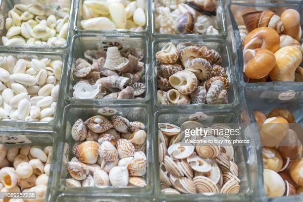 Beautiful little shells sold in the street shop in Kenting, Taiwan