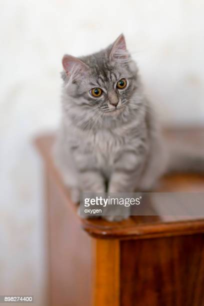 Beautiful little the cat sits on a wooden bedside table