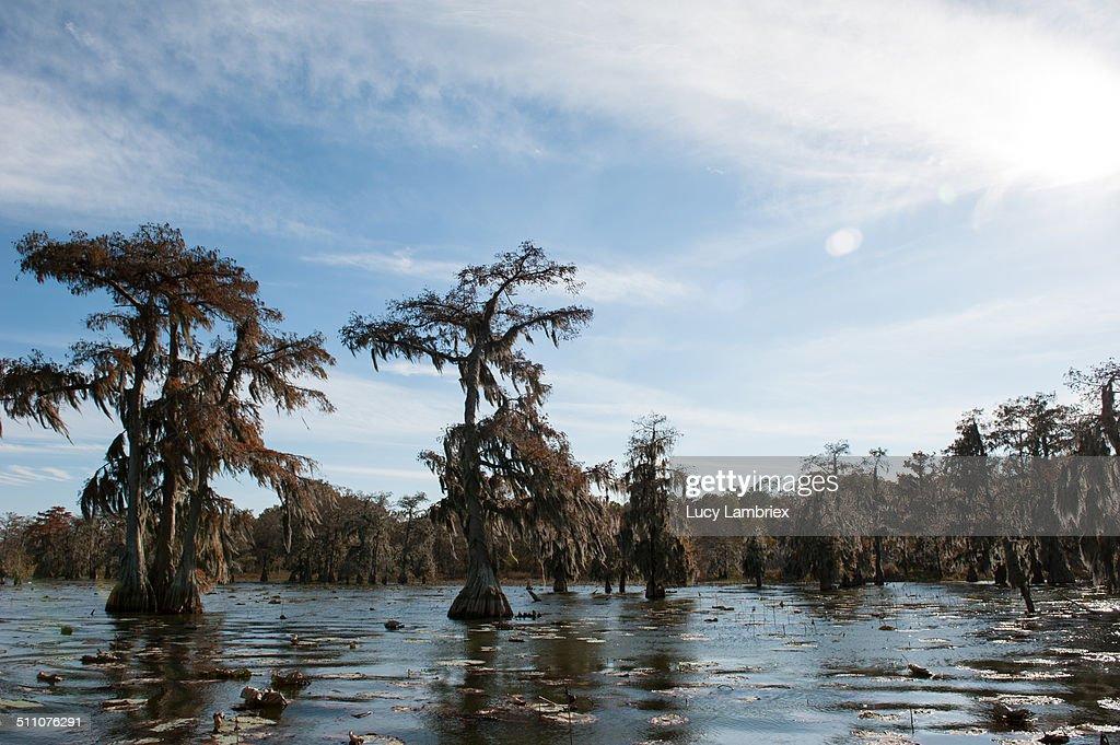 Beautiful Louisiana Coastline : Stock Photo
