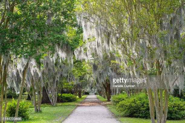 beautiful lush path - template_talk:south_carolina stock pictures, royalty-free photos & images