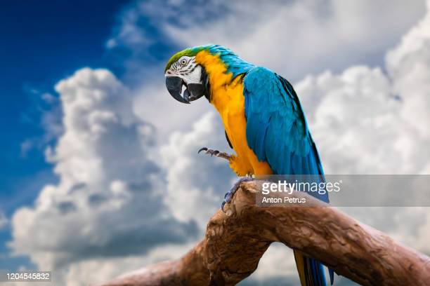 beautiful macaw parrot on sunset sky background. - macaw stock pictures, royalty-free photos & images