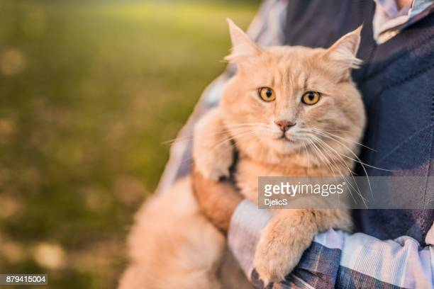 Beautiful Maine Coon cat loves being taken outdoors by his owner.