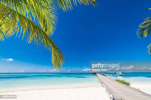 Beautiful Maldives beach, jetty, blue lagoon and palm trees