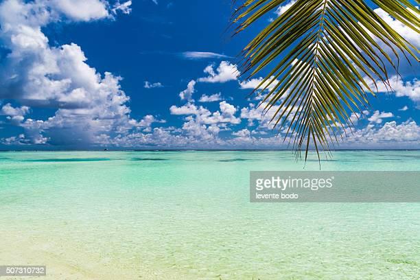 Beautiful Maldives beach with a palm leaf
