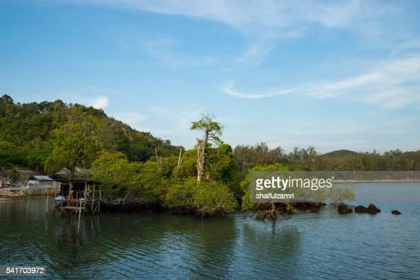 beautiful mangrove area in sibu island of johor, malaysia - shaifulzamri fotografías e imágenes de stock