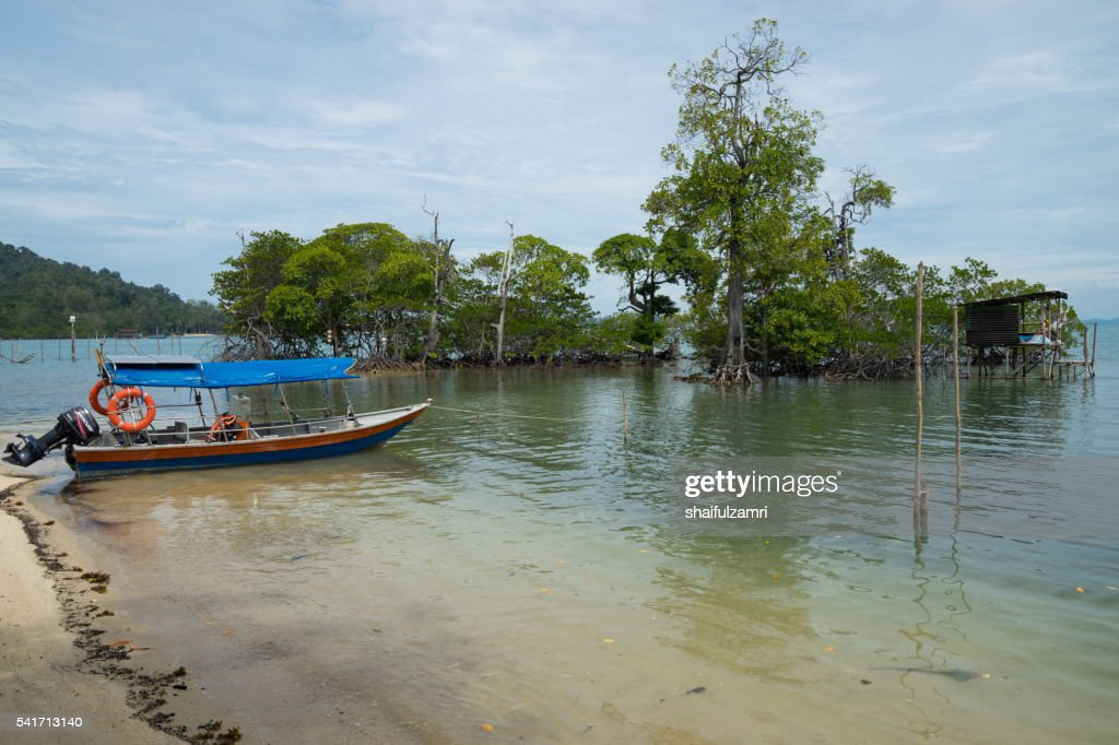 Beautiful mangrove area in Sibu island of Johor, Malaysia : Stock Photo