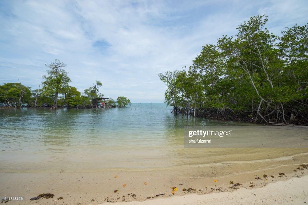 Beautiful mangrove area in Sibu island of Johor, Malaysia : Stock Photo