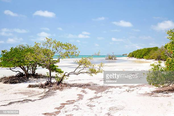 beautiful mangrove bay - mangrove tree stock pictures, royalty-free photos & images
