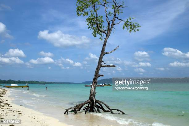 beautiful mangrove tree rising out of crystal clear turquoise water, tropical beach, andaman islands - argenberg stock-fotos und bilder
