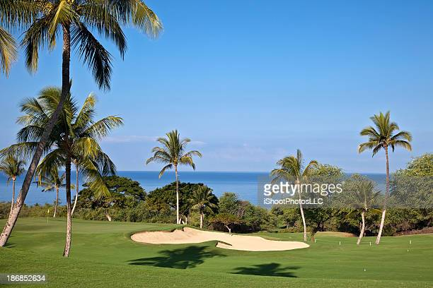 Beautiful Maui Golf course surrounded by palm trees
