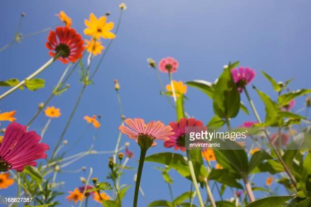 Bela Prado de flores silvestres.