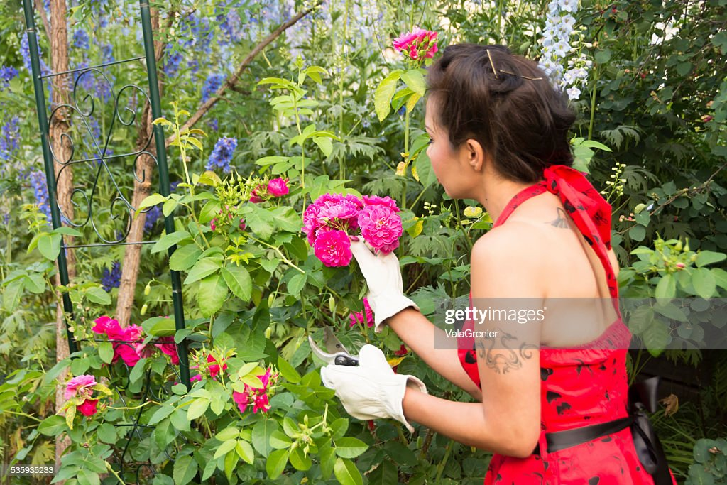 Beautiful mid adult Native woman gardening with roses. : Stock Photo