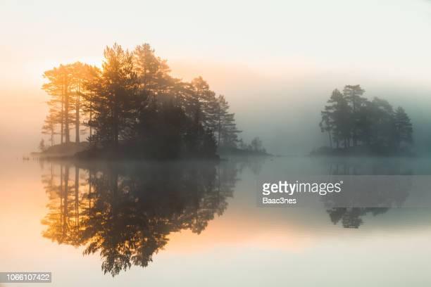 beautiful morning in the forest, norway - september stockfoto's en -beelden