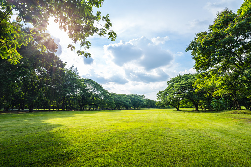 Beautiful morning light in public park with green grass field 841278554