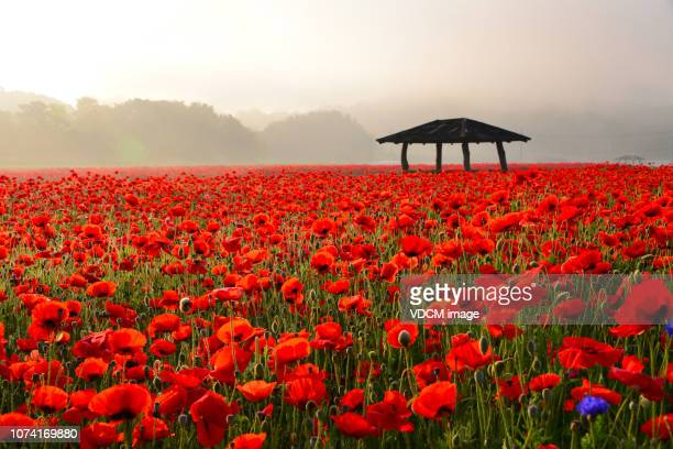 beautiful morning  vd718 - south korea stock pictures, royalty-free photos & images