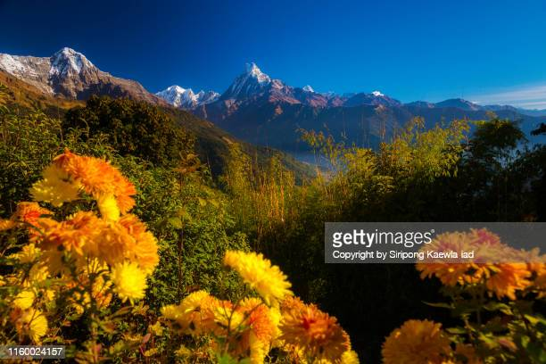 beautiful morning view of the machhapuchhre and hinchuli from tadapani village, nepal. - pokhara stock pictures, royalty-free photos & images