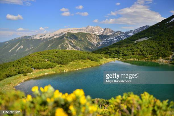 beautiful mountain lake on sunny day with yellow flowers in foreground - freshwater stock pictures, royalty-free photos & images