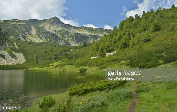 beautiful mountain lake surrounded by lush green meadow and pine trees - pirin mountains stock pictures, royalty-free photos & images