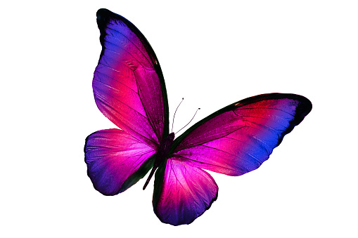beautiful multicolor butterfly isolated on white background 1064504490