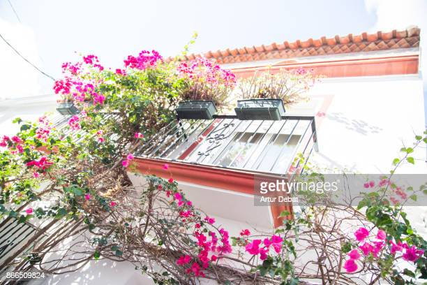 Beautiful narrow streets in the south of Spain with white houses and vegetation with flowers during trip in the sunny Andalucia.