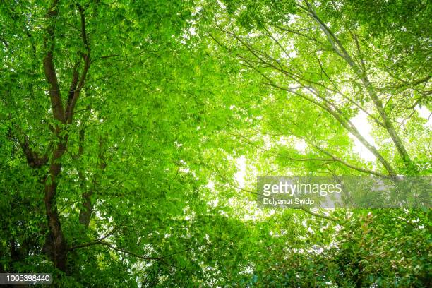 beautiful nature at morning in misty spring forest with sun - lush foliage stock pictures, royalty-free photos & images